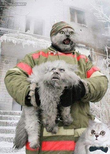 пожарник с серым пушистым котом