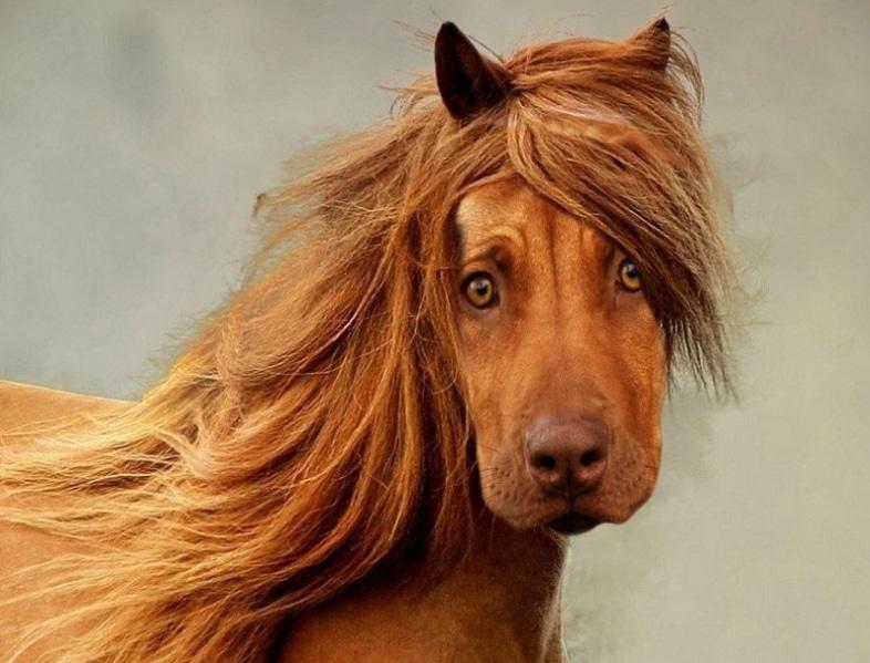 рыжий конь с головой собаки