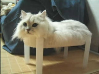 пушистый белый кот лежит на стуле