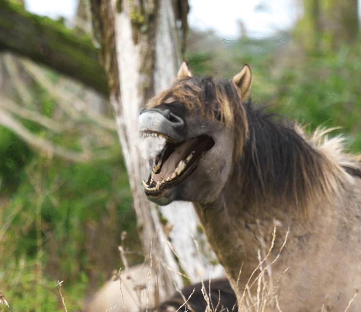 лошадь с пастью собаки