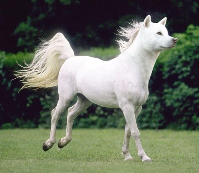 белая лошадь с головой собаки