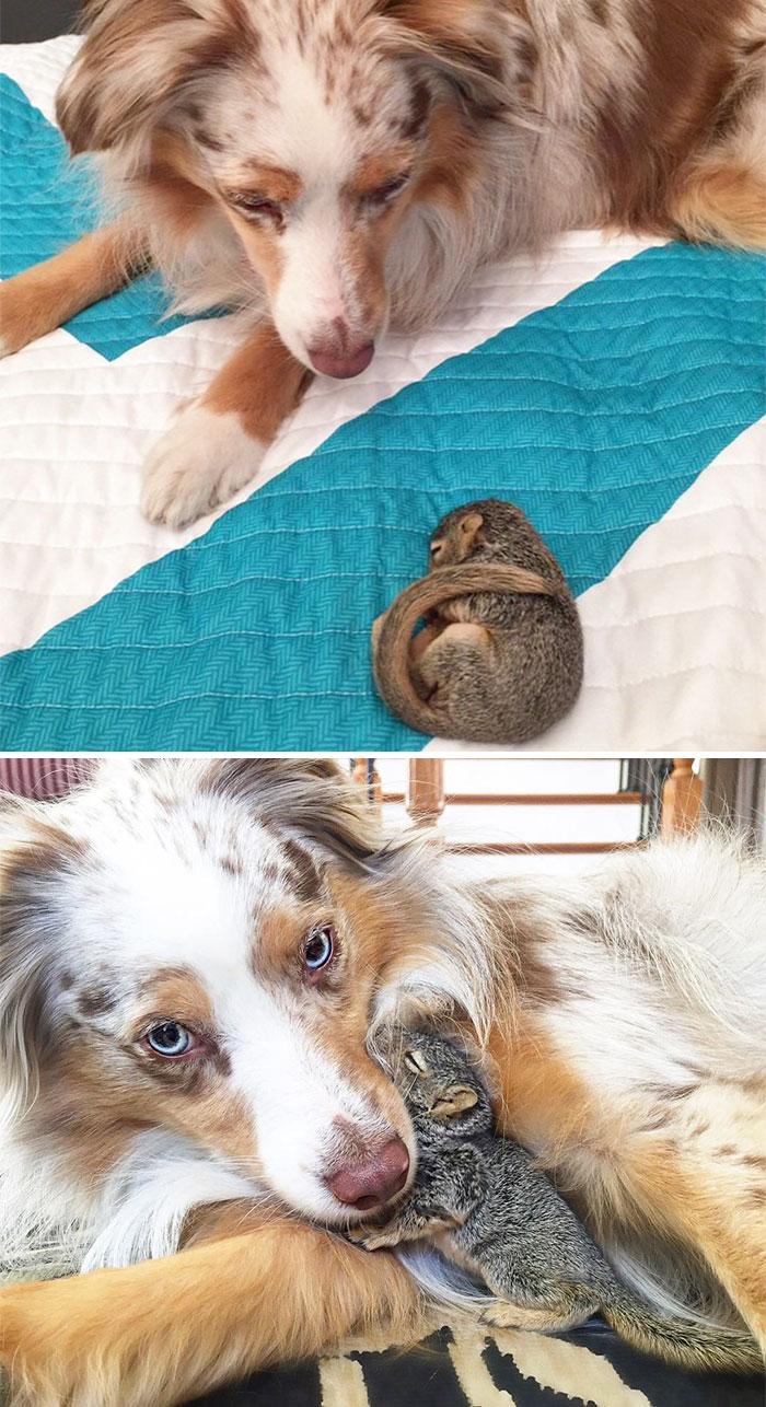 Собака и белка