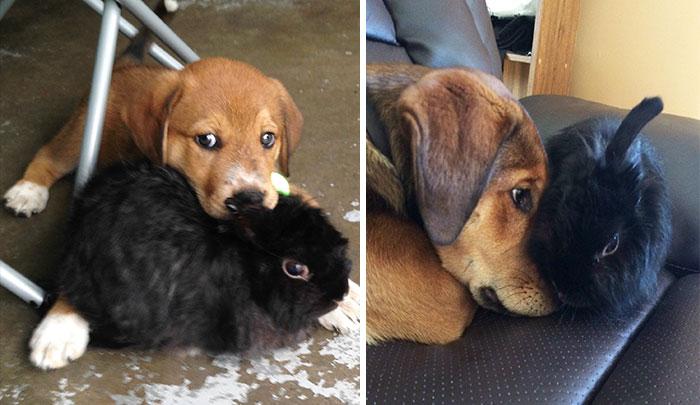 Фото малышей щенка и крольчонка и они же в зрелом возрасте