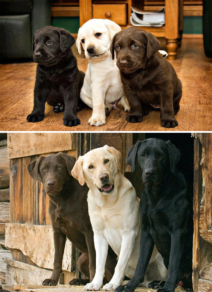 Щенята и взрослые собаки