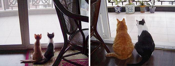 Котята смотрят в окно и они же взрослые на том же месте
