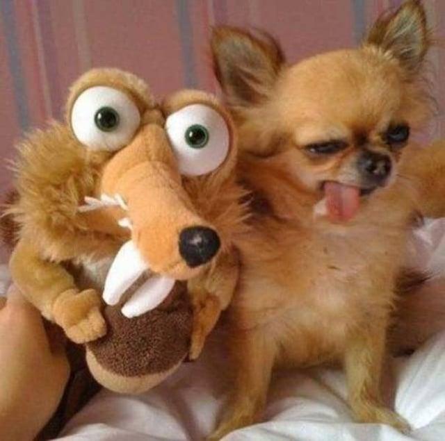 смешной пес с мягкой игрушкой
