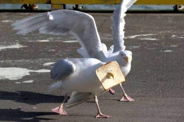 чайка и хлеб