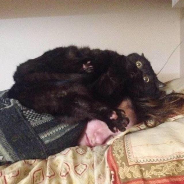кот лежит на хозяйке