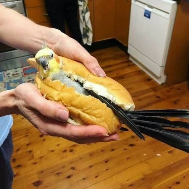 попугай в булочке