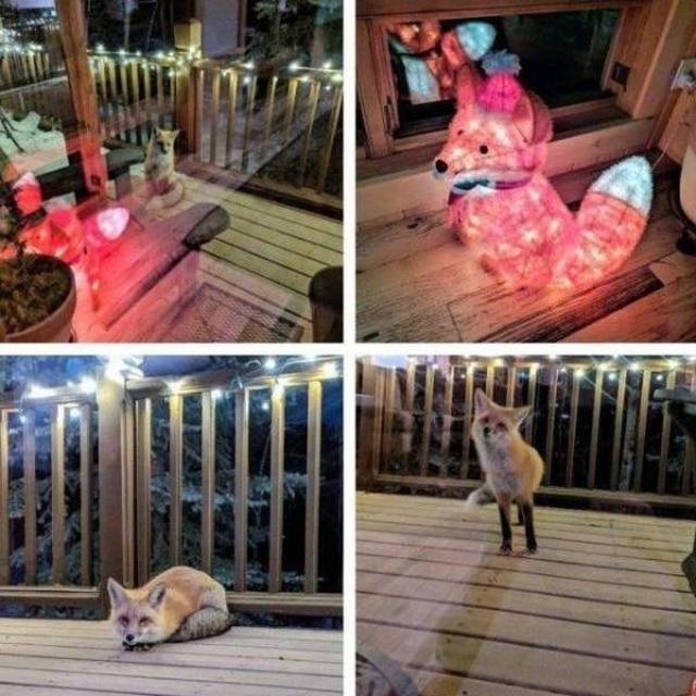 лисица пришла в гости