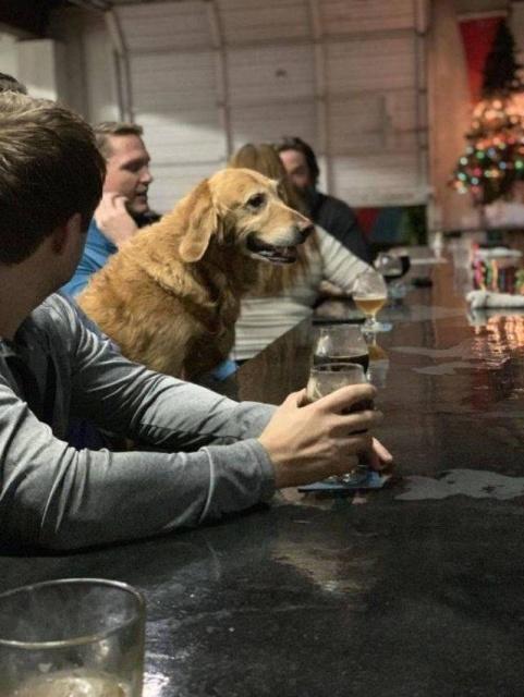 пес в баре