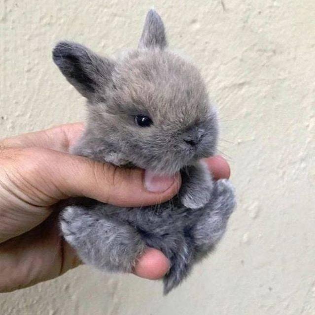 кролик малыш