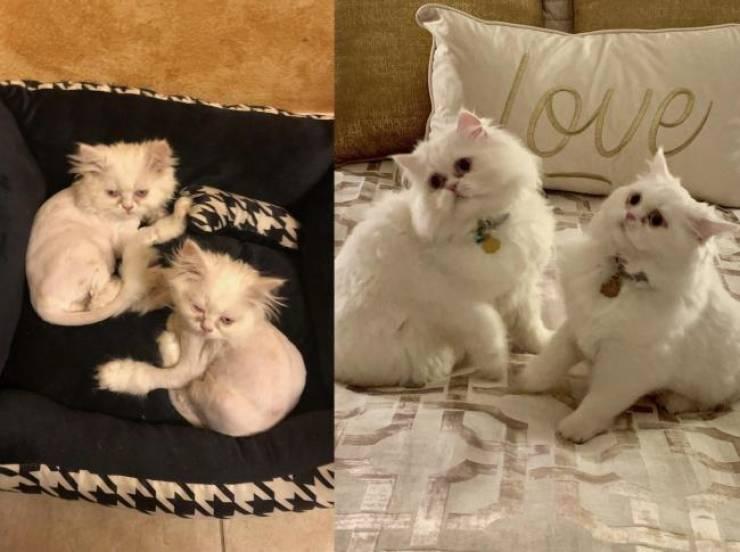 спасенные коты
