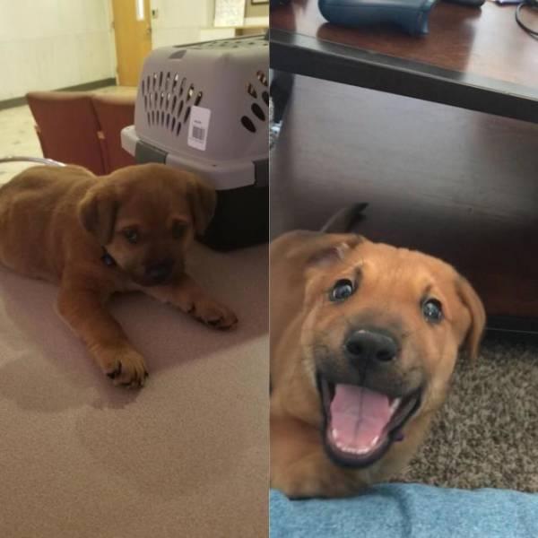 щенок вырос