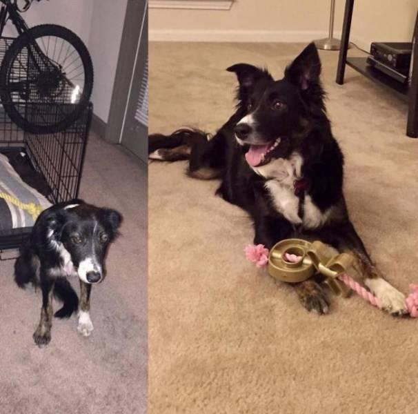 собака до и после спасения