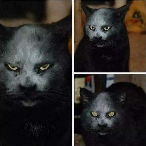 черный кот в муке