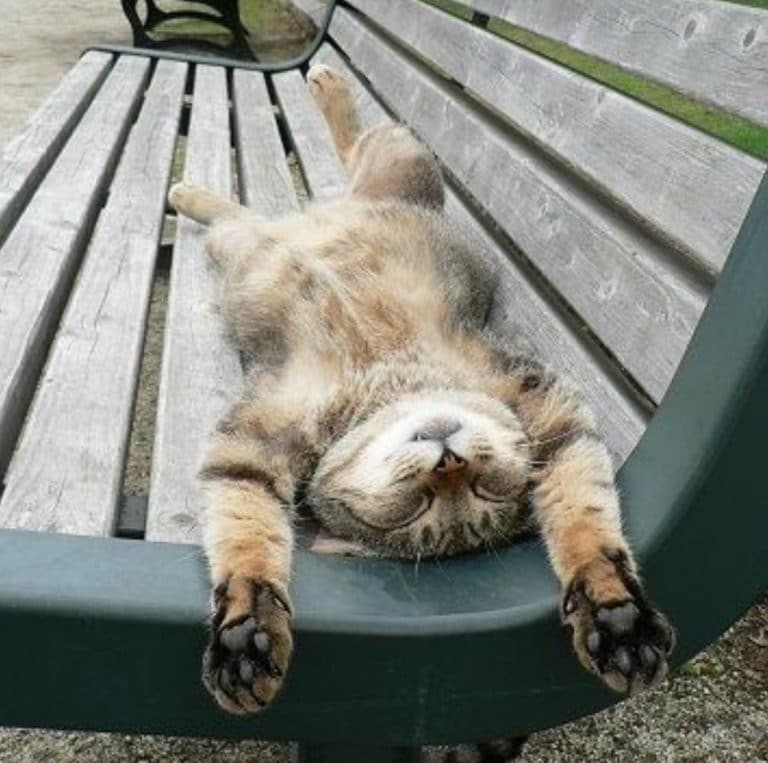 Кот спит на лавке живот кверху