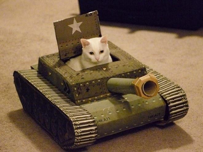 белый кот в картонном танке