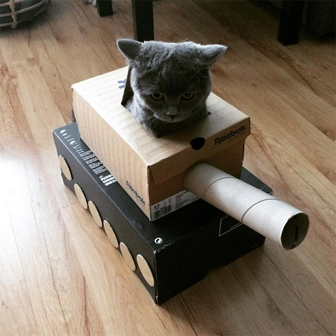 серый кот в игрушечном танке