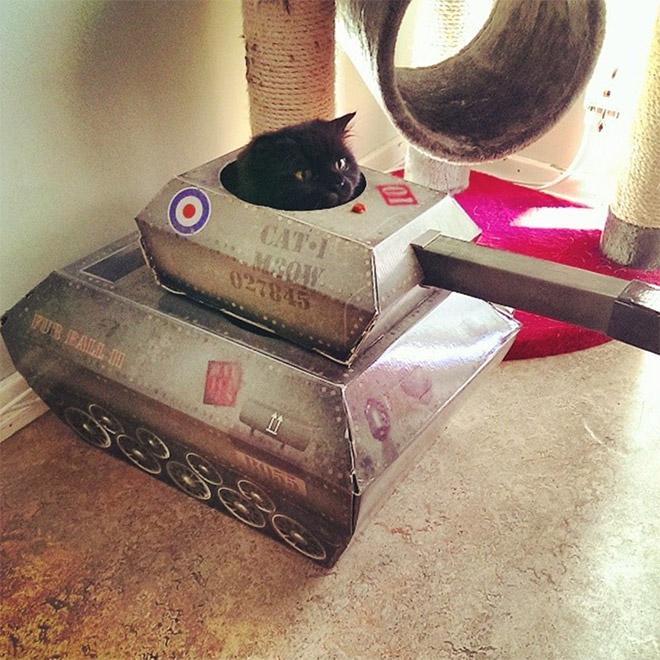 черный кот сидит в картонном танке