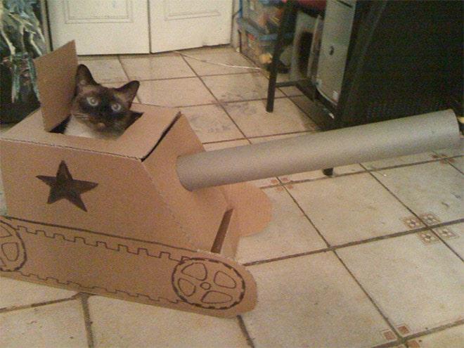 сиамская кошка в картонном танке