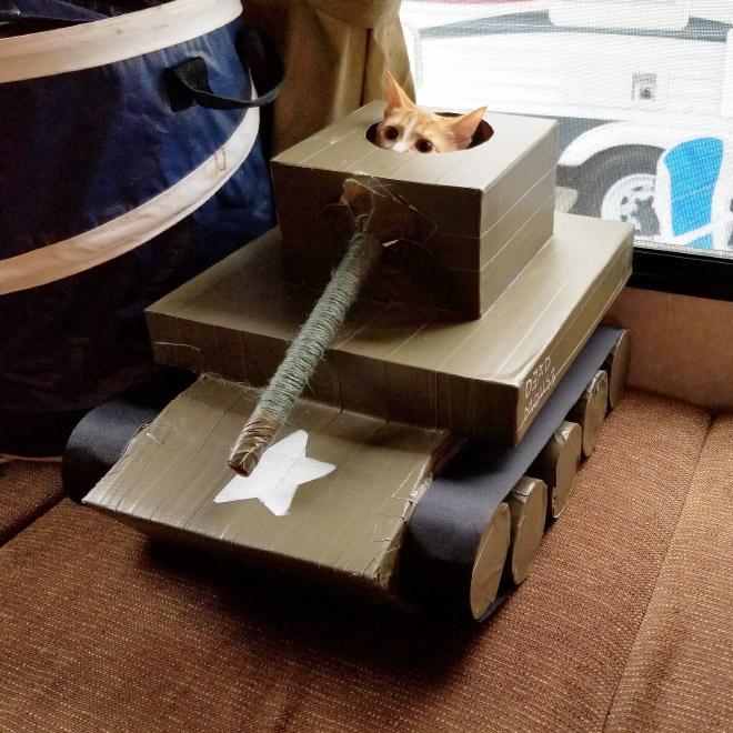 рыжий кот в картонном танке