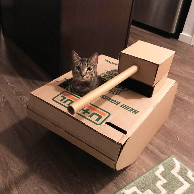 полосатый кот сидит в картонном танке