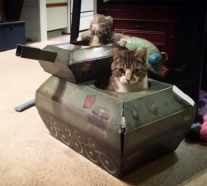 полосатый кот сидит в танке