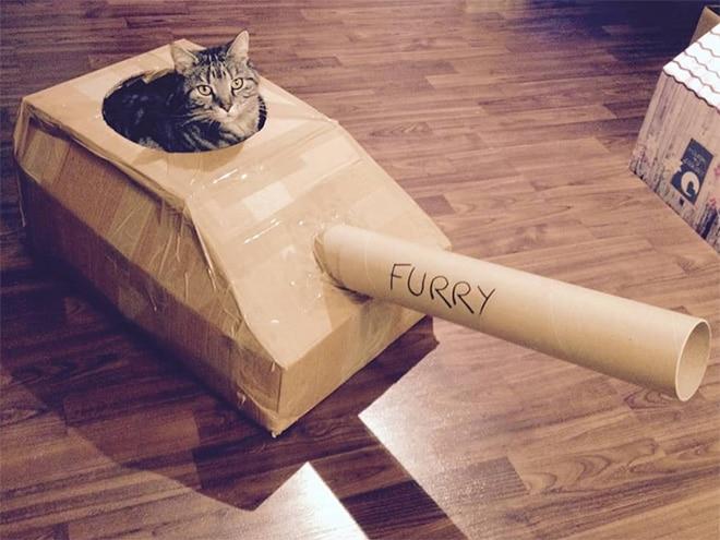 полосатый кот в картонном танке