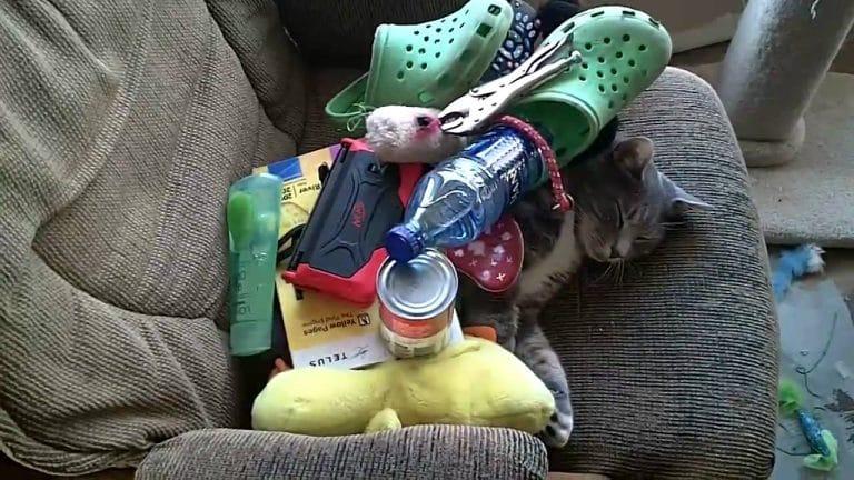 Кот спит, заваленный вещами