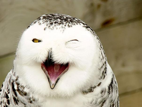 сова улыбается