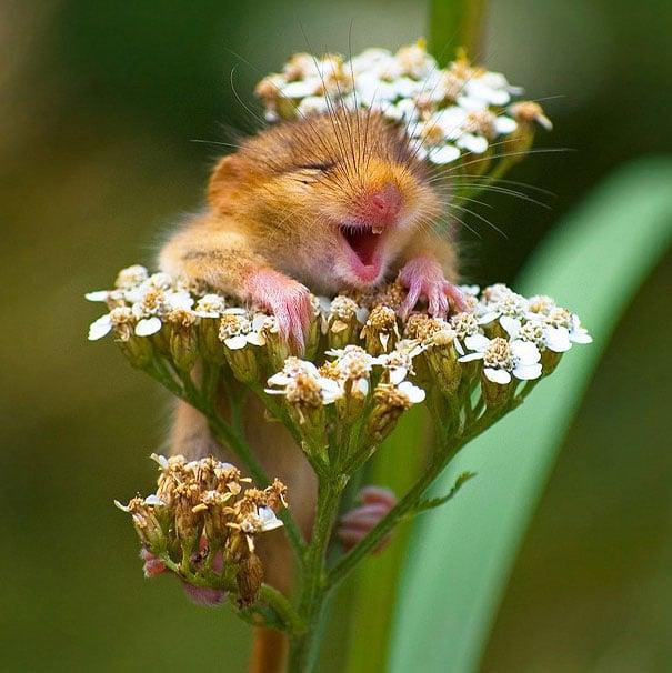 хомяк на цветке