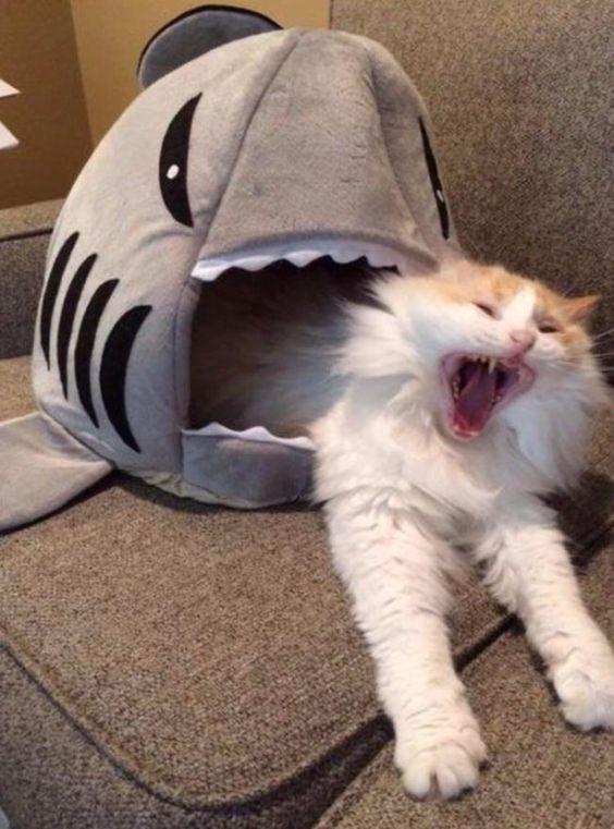 кот и мягкая игрушка
