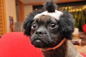 Собака с хвостиком