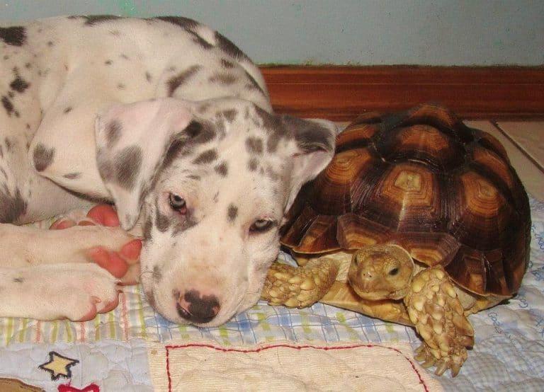 Собака спит на черепахе