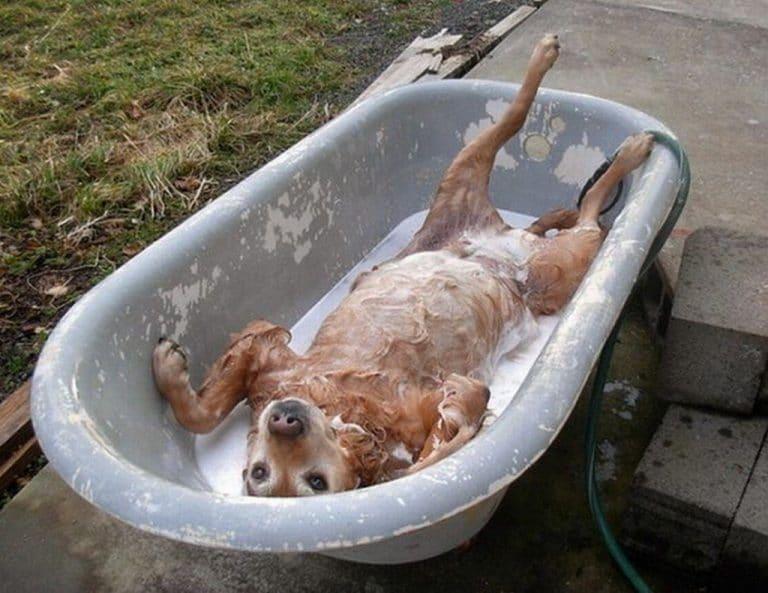 Собака валяется в ванночке