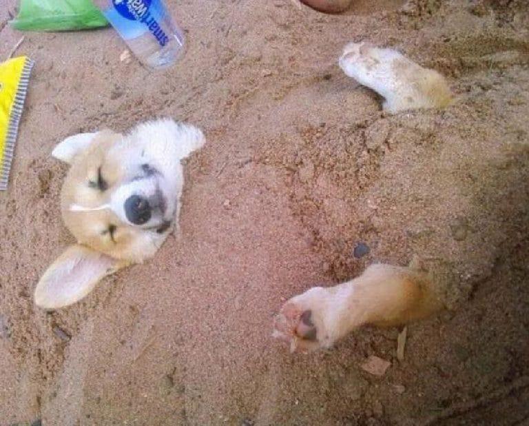 Щенок в песке
