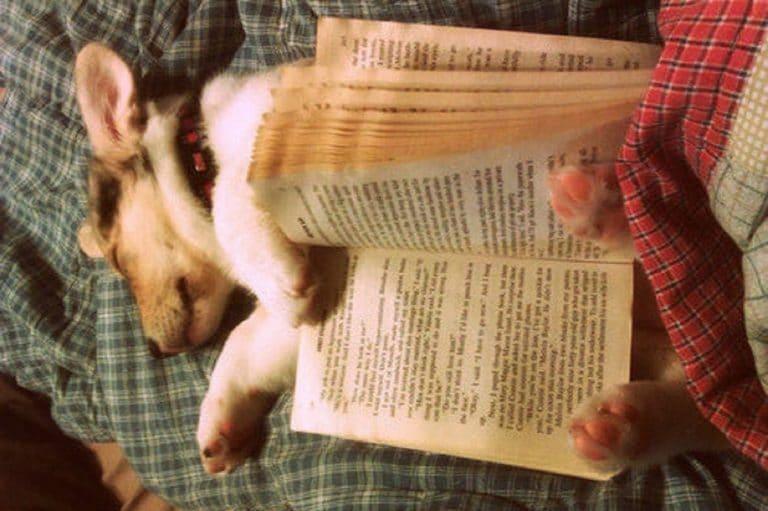 Собака спит с книгой