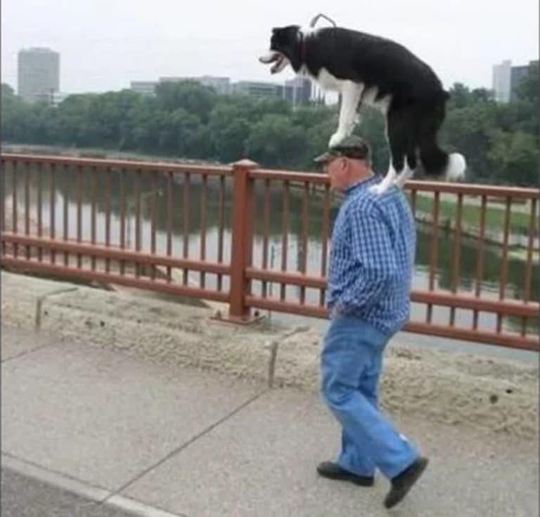 Собака сидит на плечах мужчины и передними лапами опирается на его голову