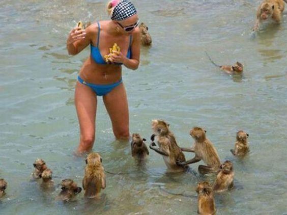 девушка и обезьянки