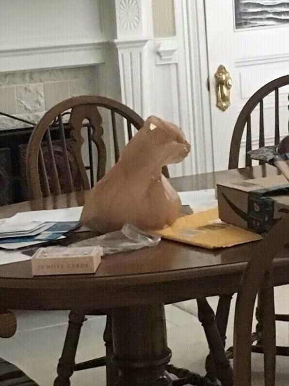 кошка оптическая иллюзия