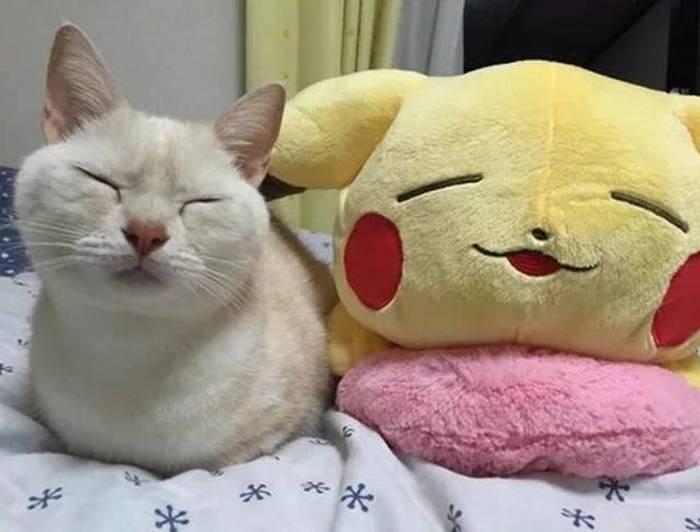белый кот спит