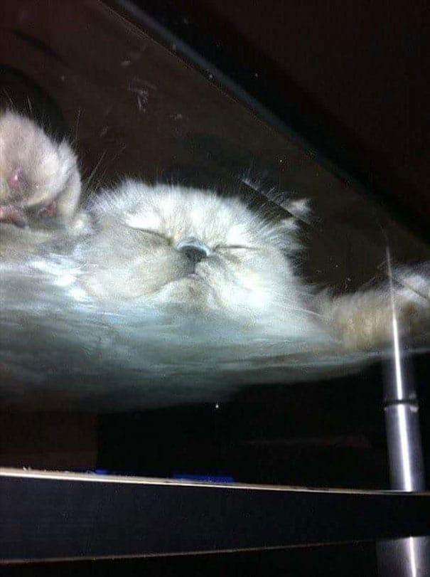 спящий кот на столе