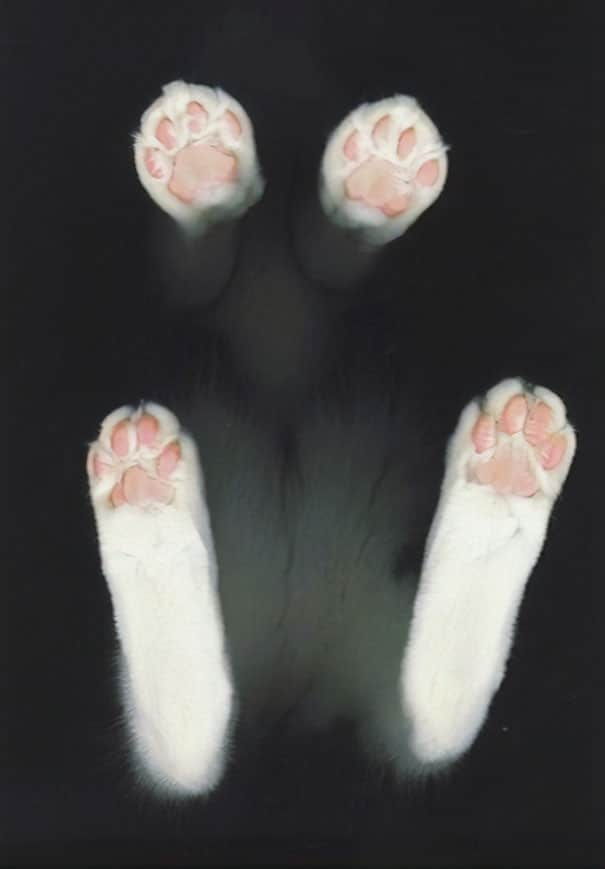 лапы коты