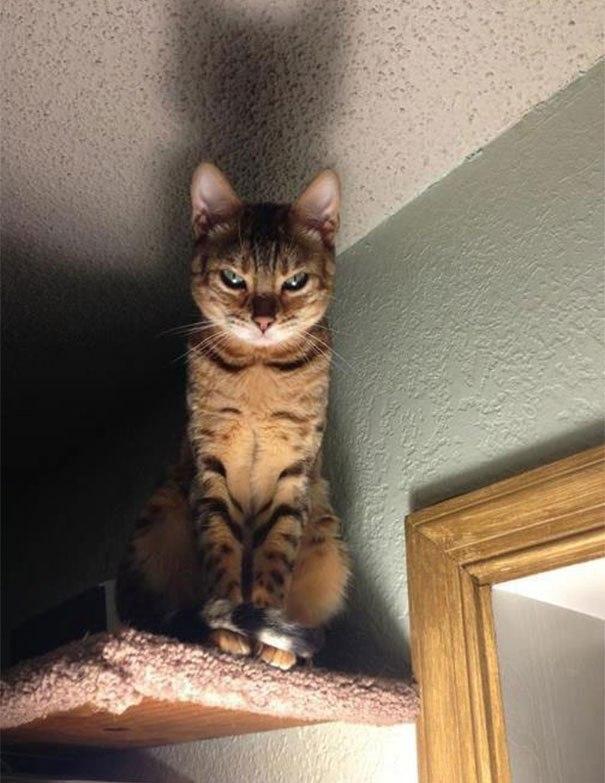 злобный кот