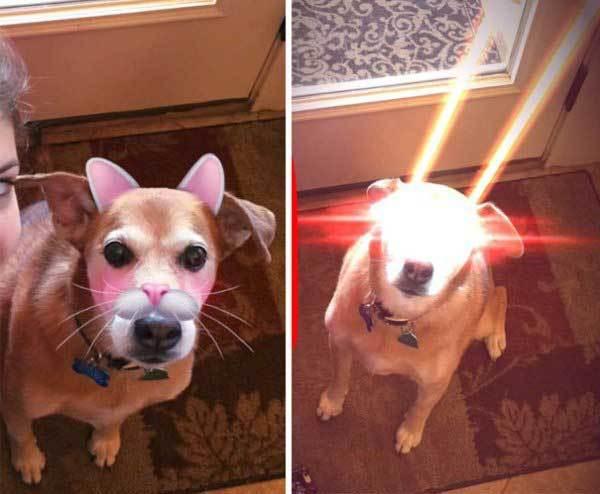 собака с фильтрами снэпчат