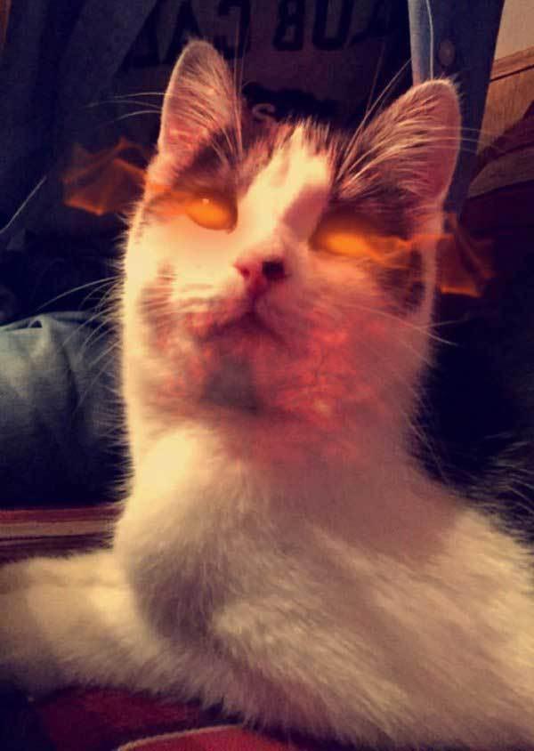 кот с красными глазами