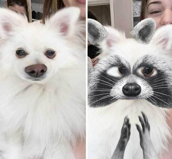 белая собака с фильтром енота