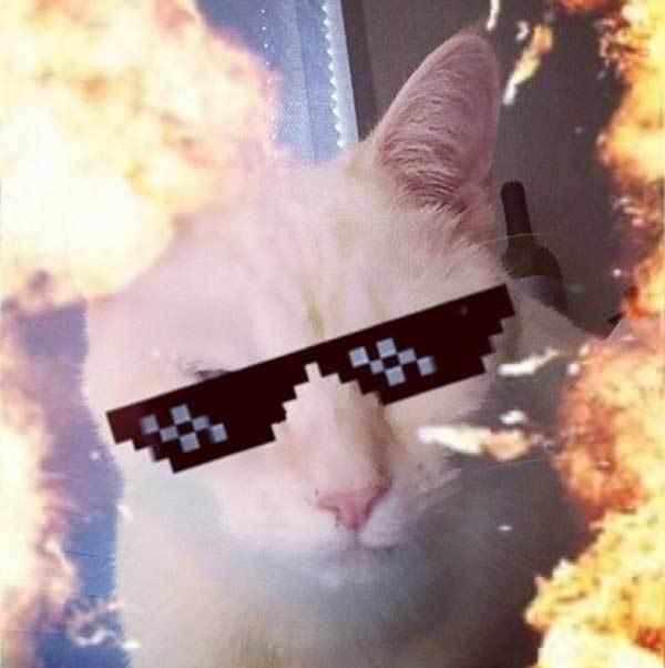 белый кот с фильтром из огня и очков