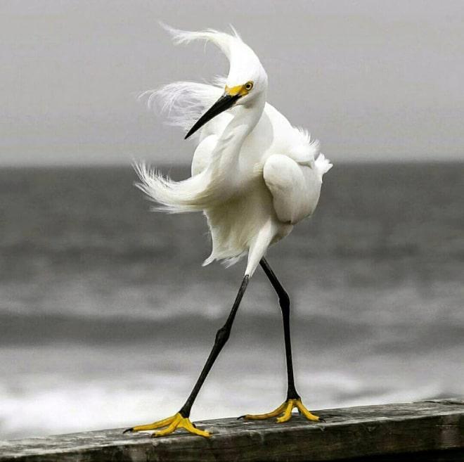белоснежная птица